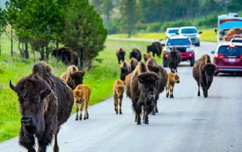 activity Safari en Jeep à Custer