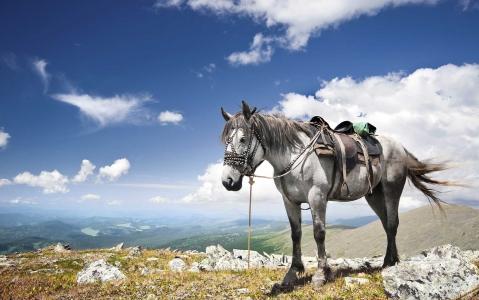 activity Balade à cheval au Sylvan Dale Guest Ranch (1h)
