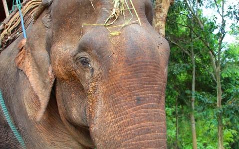 activity Balade à dos d'éléphants au Laos