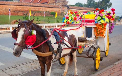 activity Balade en calèche à Bagan