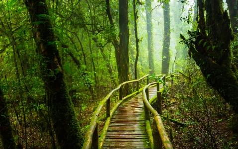 activity Entre rivière et forêt