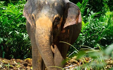 activity Balade à dos d'éléphant au Cambodge