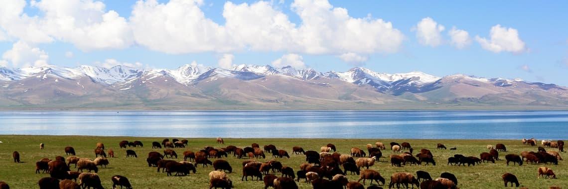 Fiche pays Kirghizistan
