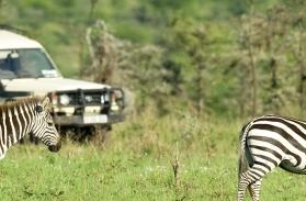 Choses à faire en Tanzanie