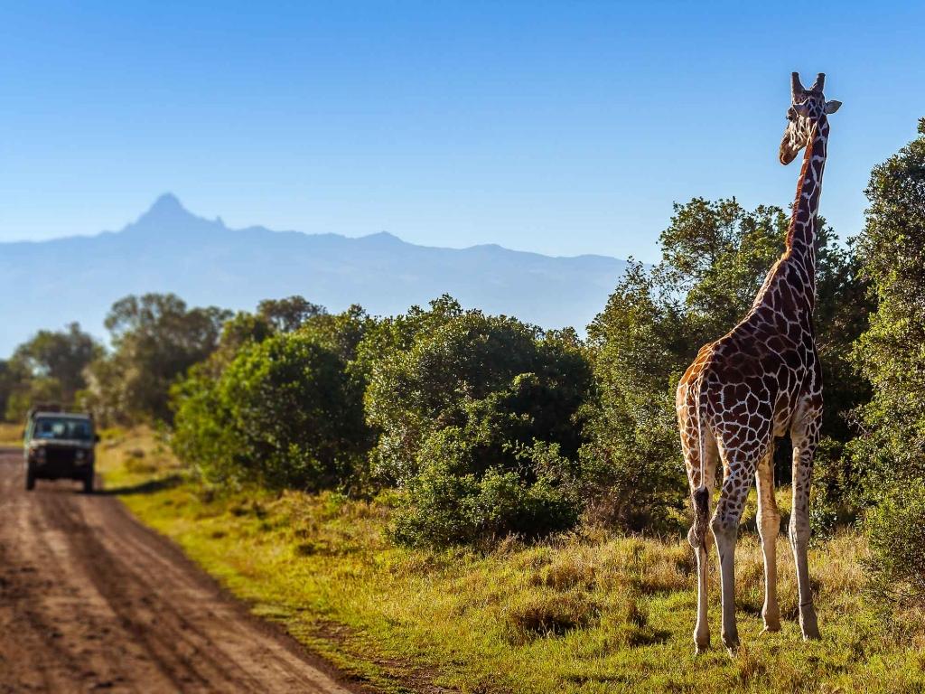 Safari au Parc de Queen Elizabeth