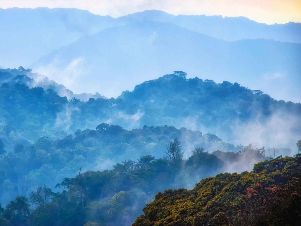 Nyungwe, la forêt dans les nuages