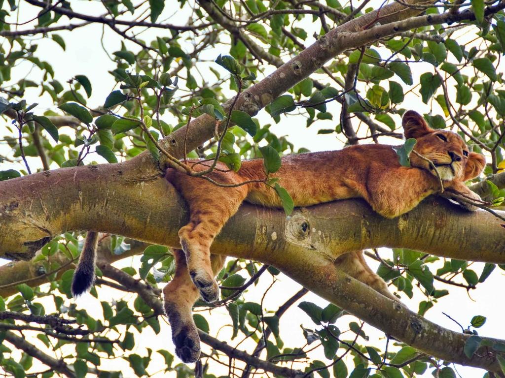 Les animaux de la savane – safari en bateau