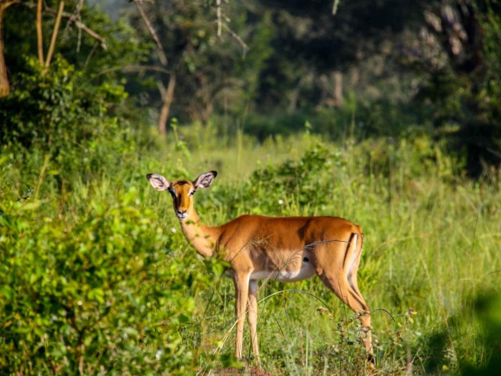 Safari à pied, traversée de l'Equateur et vol vers Paris