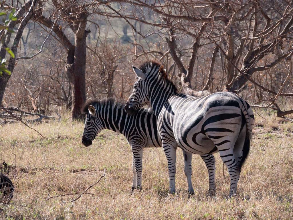 Safari au pays des Big Five