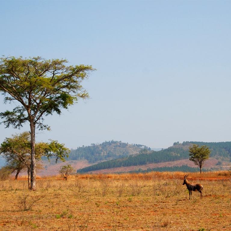Variétés du Swaziland