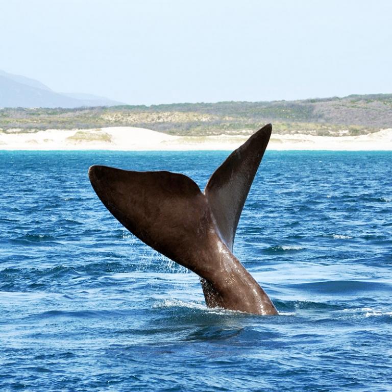 Nez à Nez avec les baleines