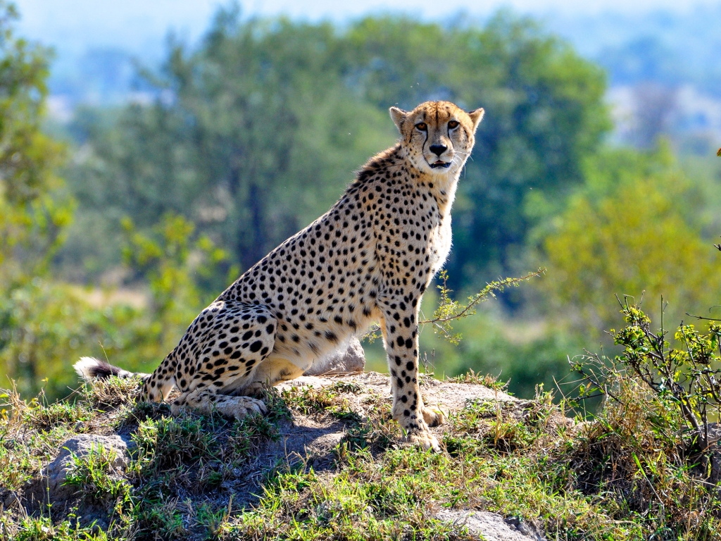 Premier safari, au royaume des animaux