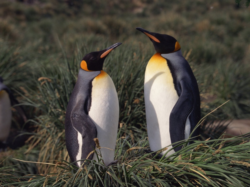Puerto Madryn et sa faune diversifiée