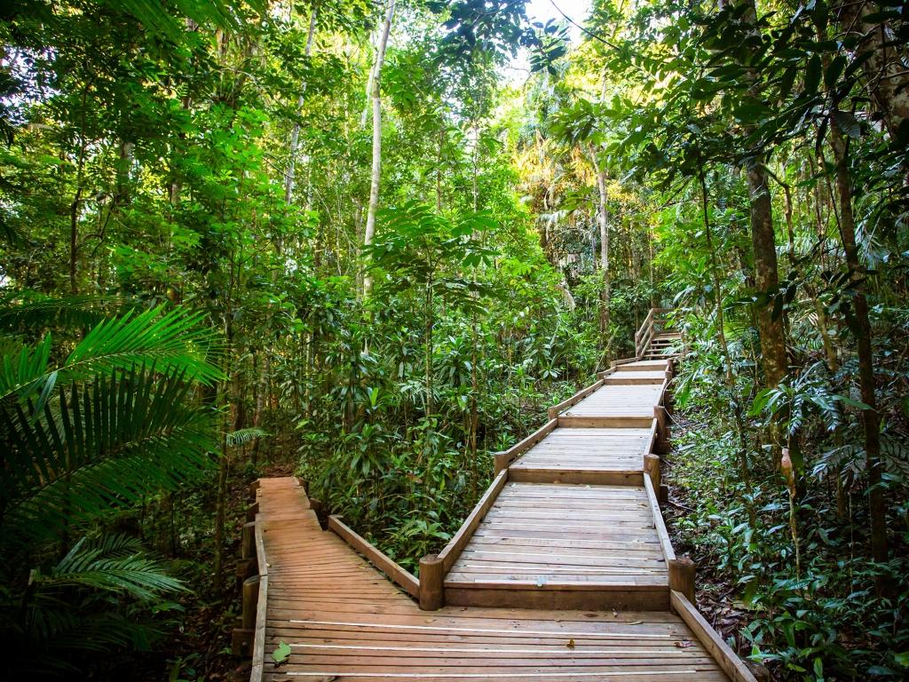 Dans les forêts tropicales du Queensland