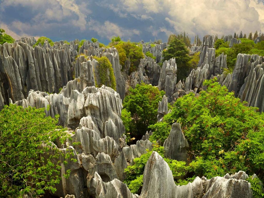 Forêt de pierre et temples bouddhistes