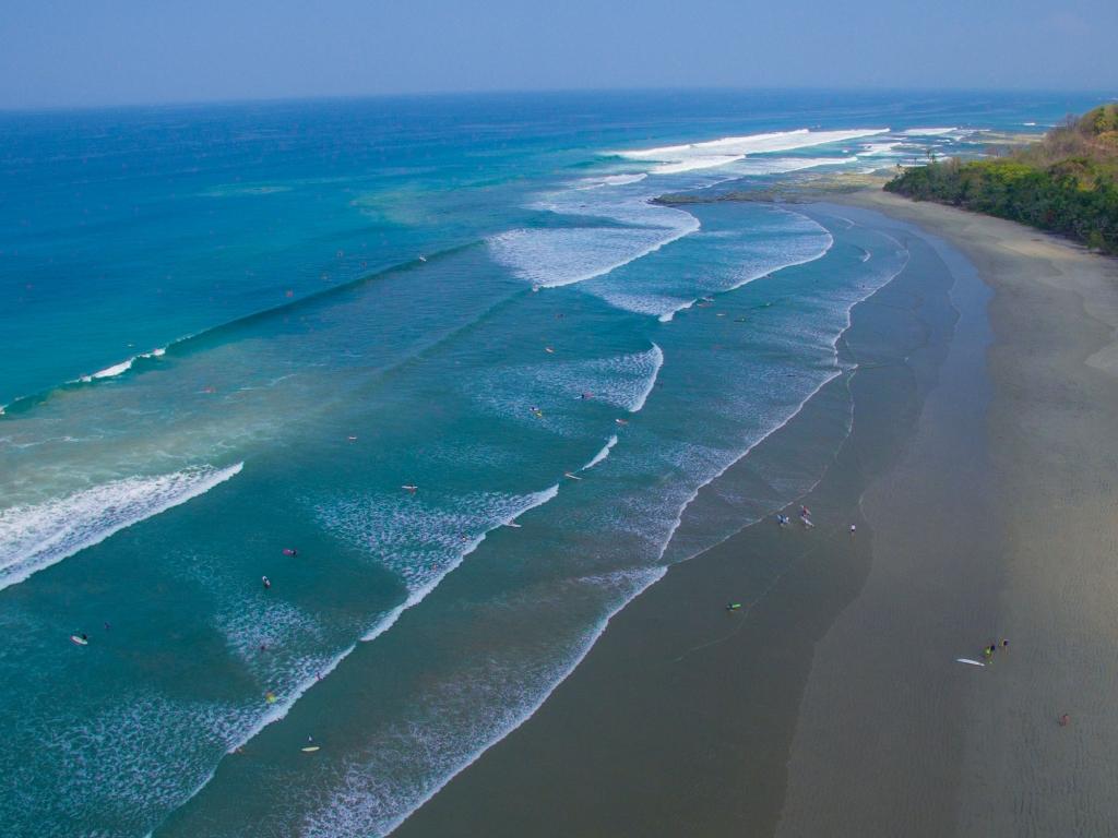 Le Guanacaste authentique