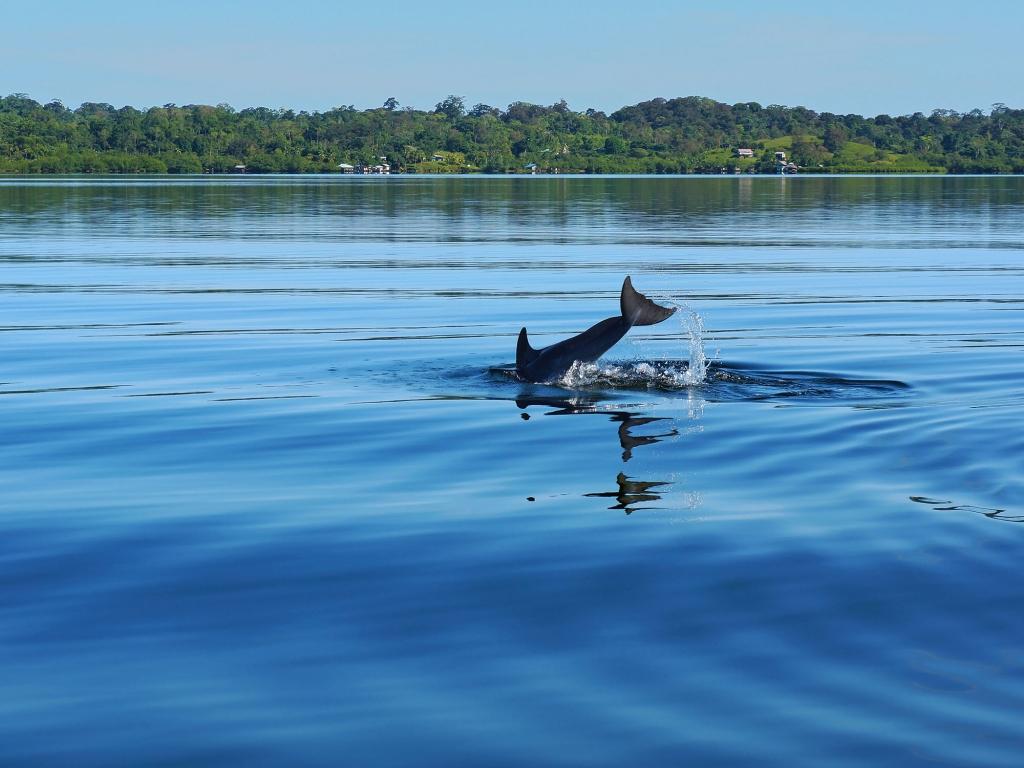 Baignade, snorkeling et dauphins