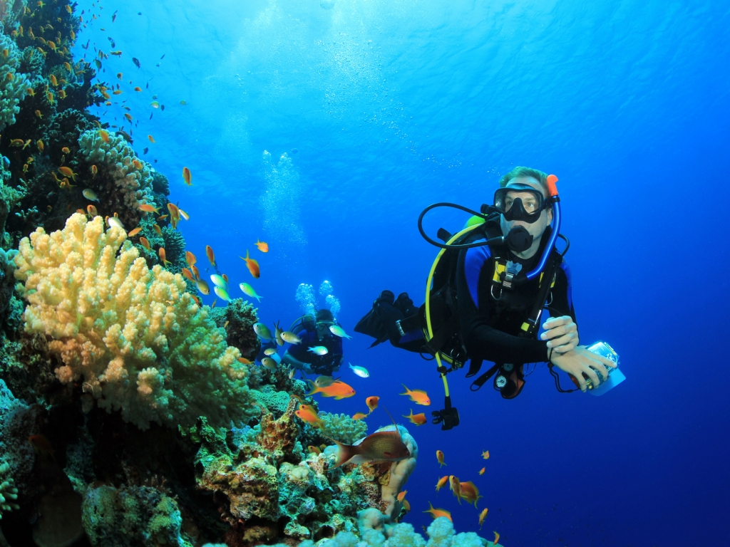 Barrière de corail et requins baleines