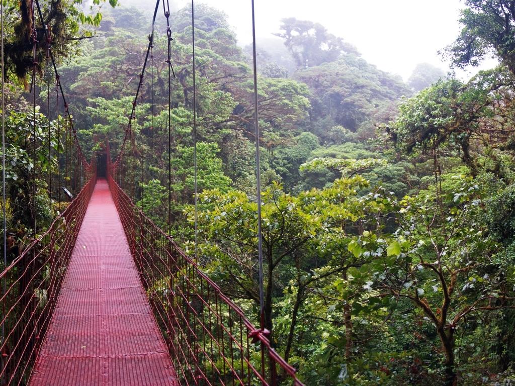 Immersion dans la jungle du haut des ponts du suspendus