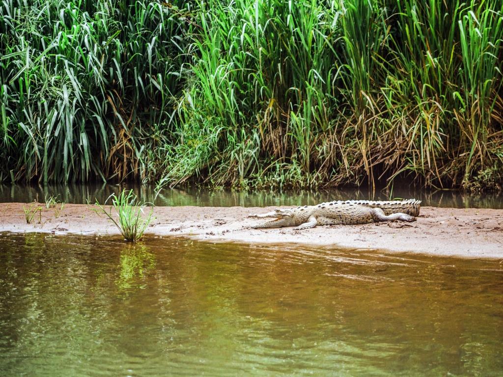Entre les mâchoires du crocodile
