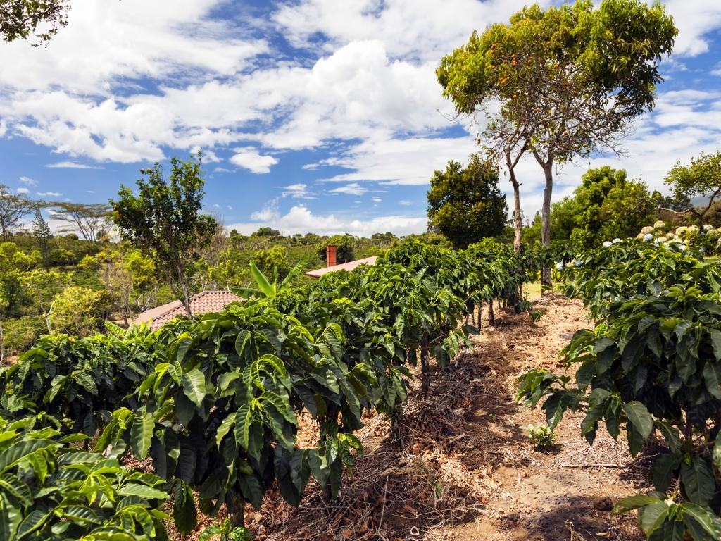 Sarapiqui : terres agricoles