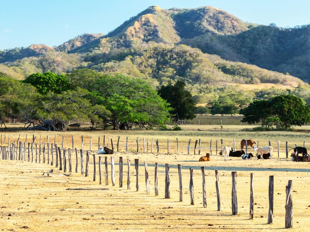 Guanacaste : Terres de Cow-boys