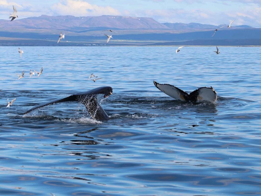 Baleines à tribord !