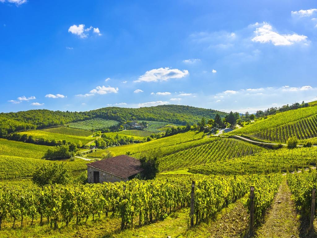 Dégustation de Chianti au cœur des vignobles toscans