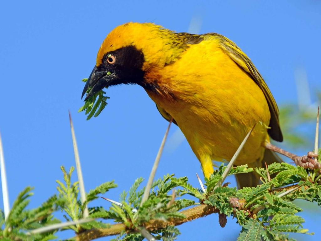 Safari ornithologique à pied au bord du lac
