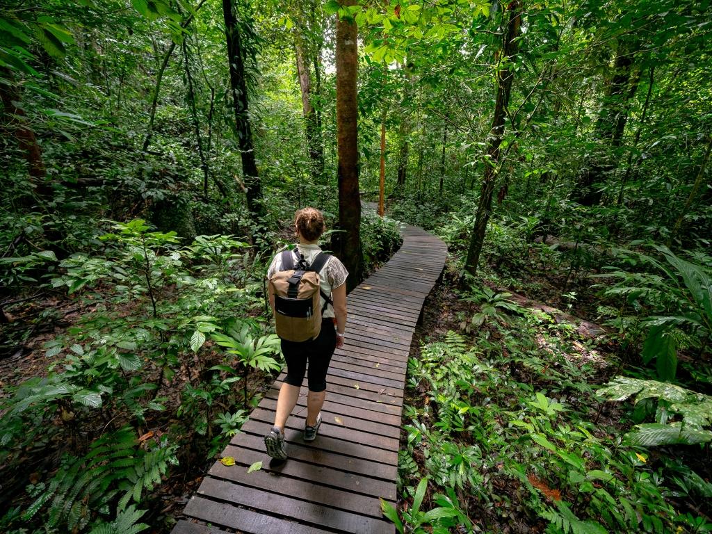 Retour à travers la jungle