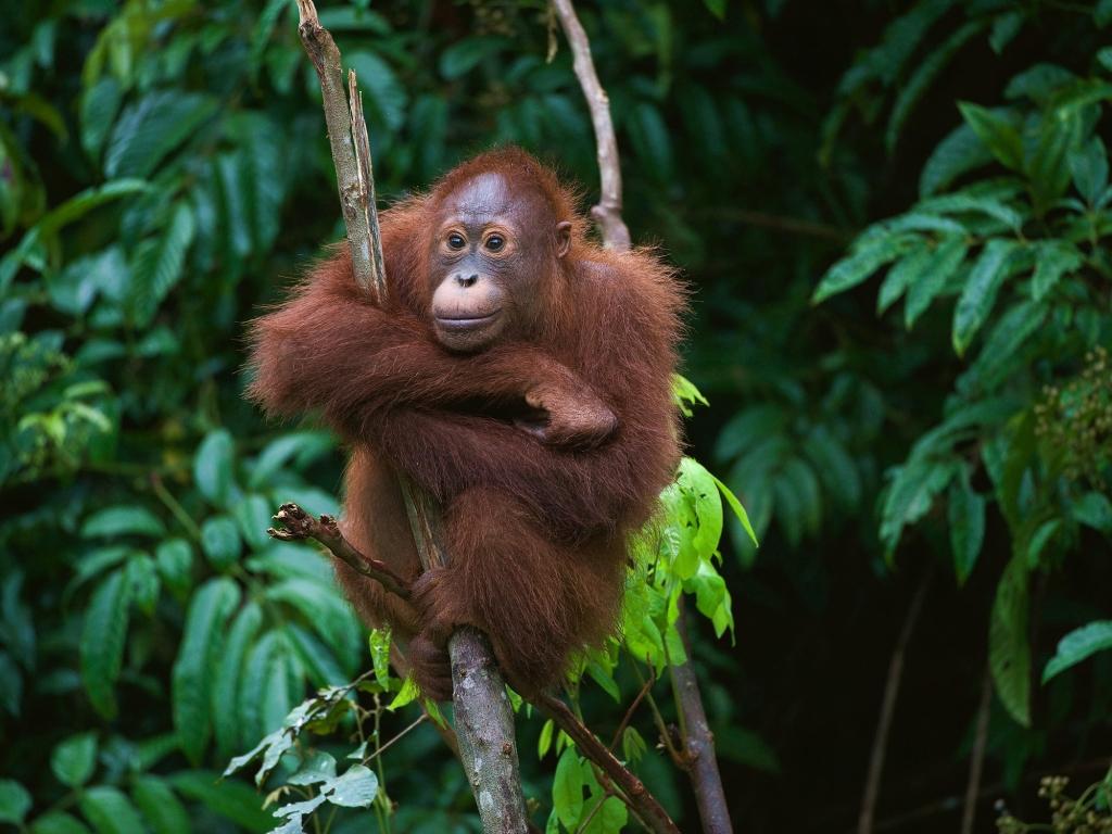 Au cœur de la jungle épaisse de Bornéo