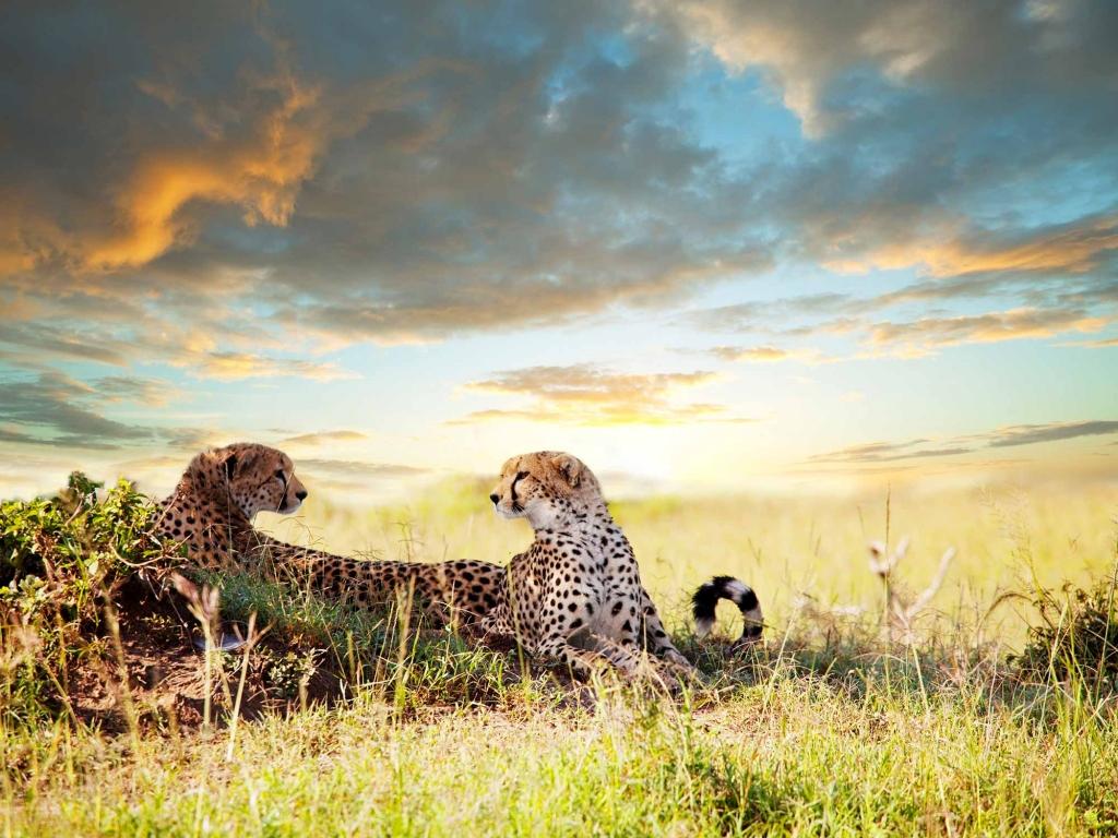 Visite du Centre de Protection des Guépards et faune d'Etosha