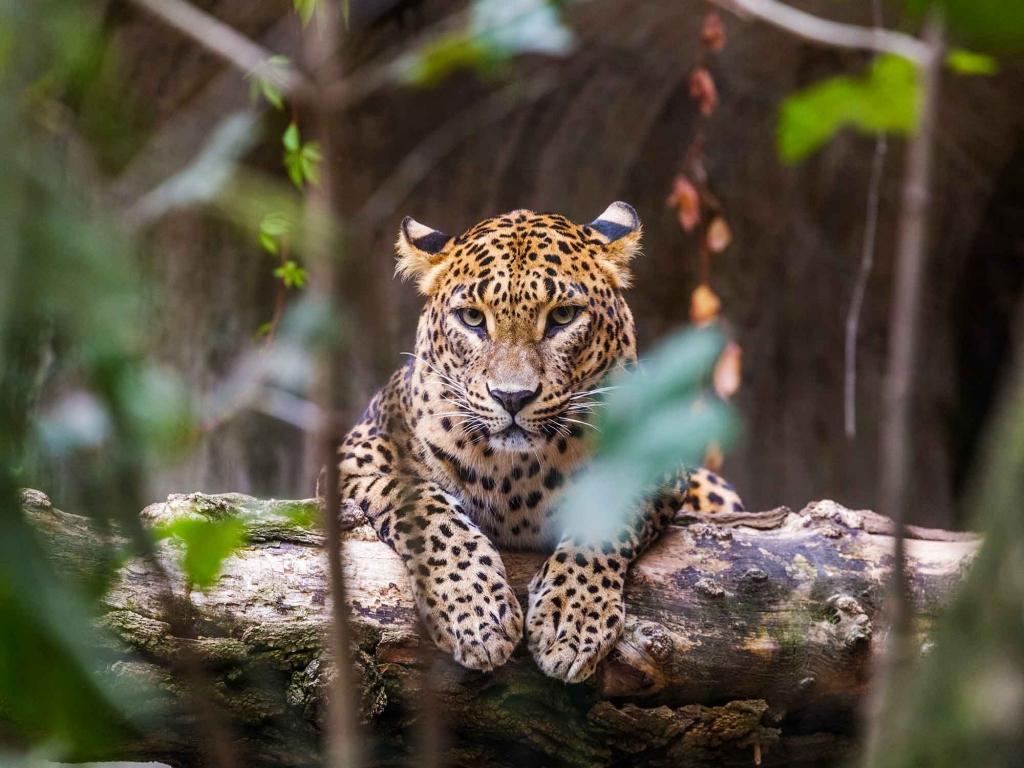 Safari au cœur du parc national Yala