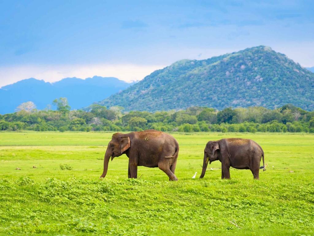 Safari dans le Parc National de Yala