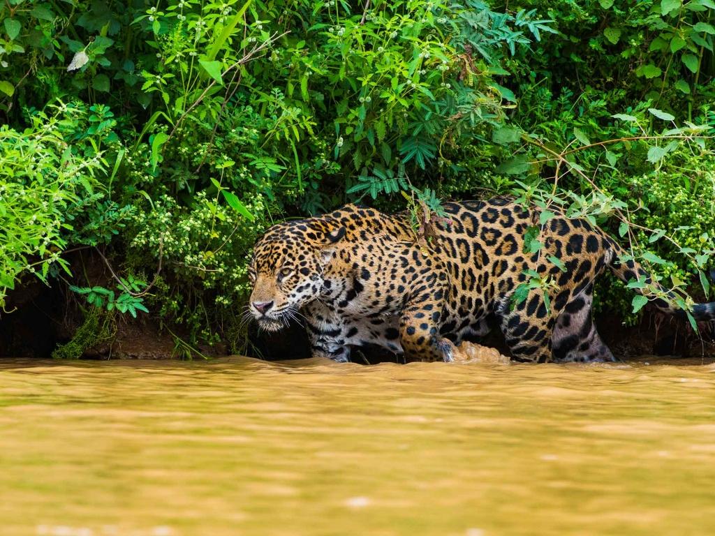 Eléphants, buffles et léopards à Yala
