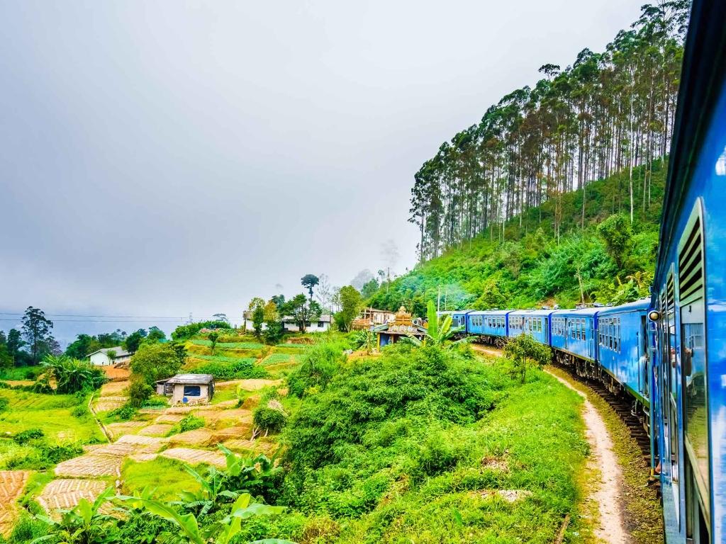 Train dans les plantations de thé