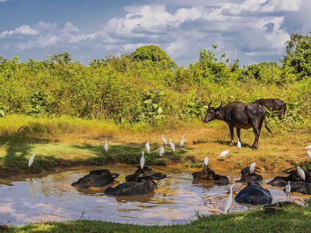 Safari dans le Parc National Uda Walawe