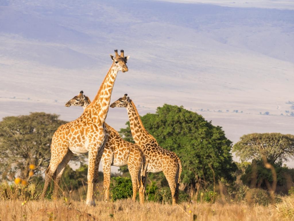 L'incroyable beauté du Cratère du Ngorongoro