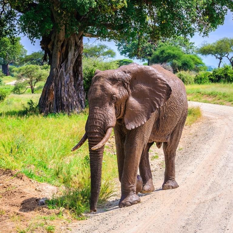 Safari le long de la rivière Tarangire