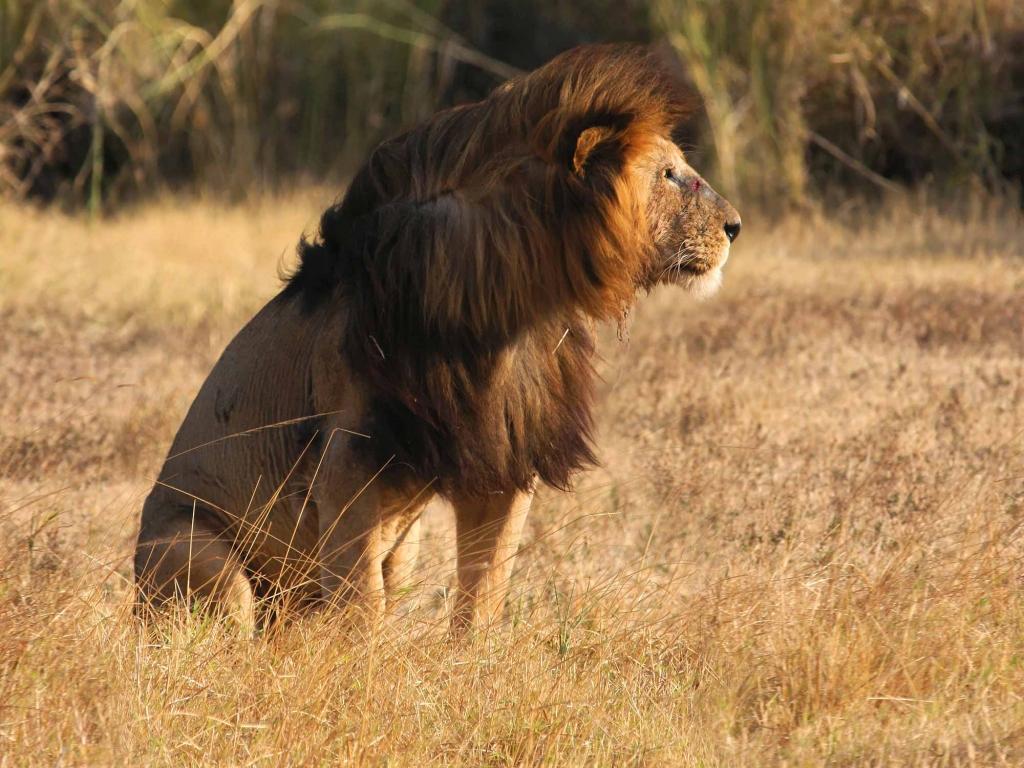 Félins et plaines immenses du Serengeti