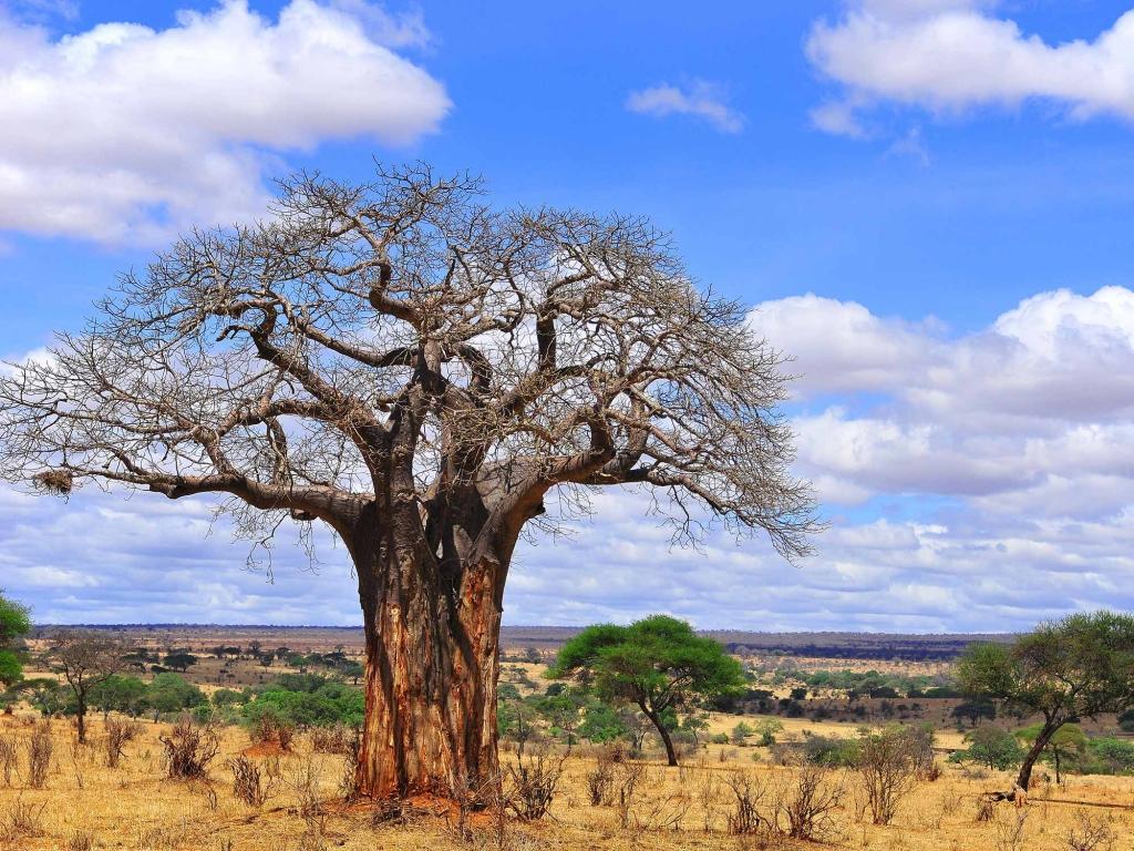 Tarangire, terre des géants : éléphants et baobabs