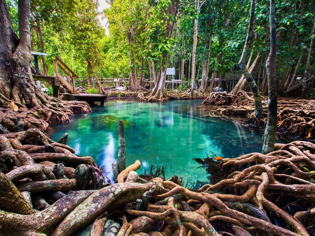 Mangrove, forêt tropicale et falaises karstiques