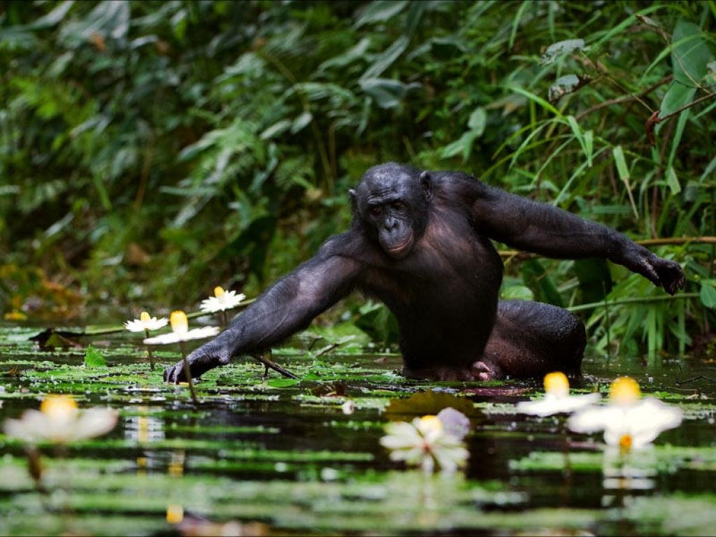 Deuxième rendez-vous avec les gorilles