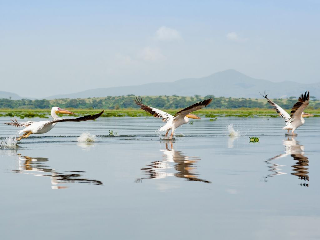 Le long des rives fleuries du Lac Naivasha
