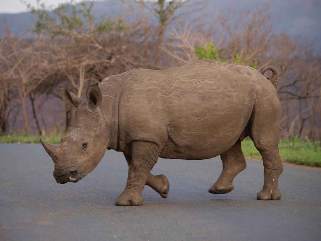 Rhino noirs et rhino blancs !