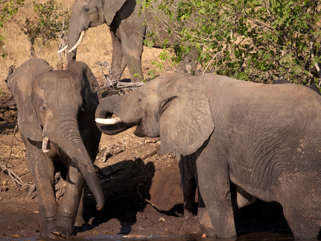 Arriver dans le Delta de l'Okavango
