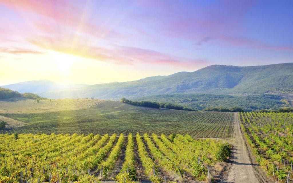 La plus célèbre région viticole d'Australie