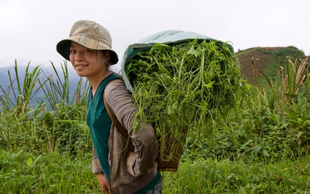 Cap vers le Sud du Laos