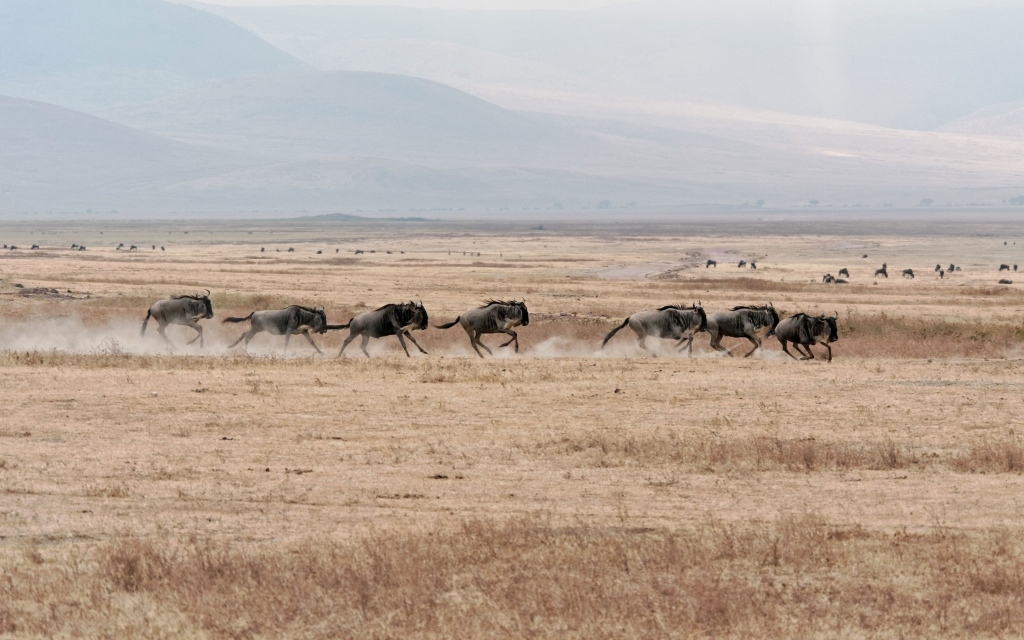 Merveilleuse caldeira du Ngorongoro !