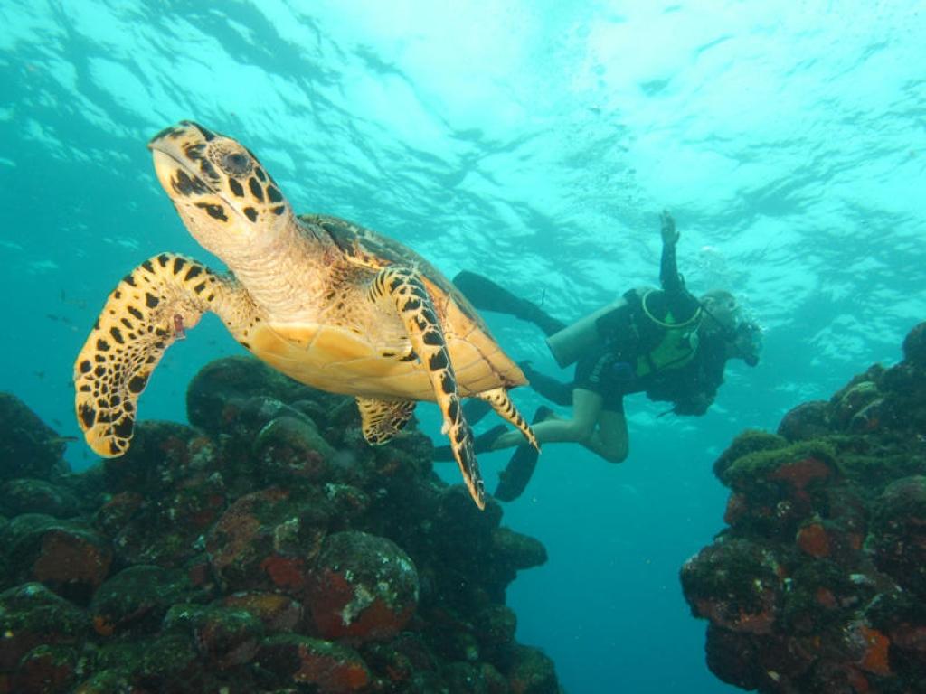 A la rencontre des tortues ! 244km
